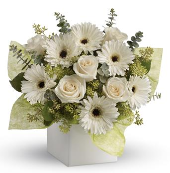 - Send serenity with this artful arrangement of pure white roses and gerberas.