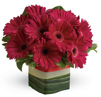 Make a singular statement with this hot pink presentation of everyone's favourite gerbera!