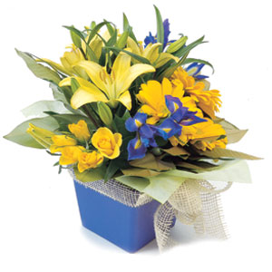 Delight her or him with a bright box of seasonal flowers