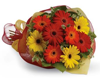 - Brighten someone's day by sending a beautiful mix of colourful gerberas.