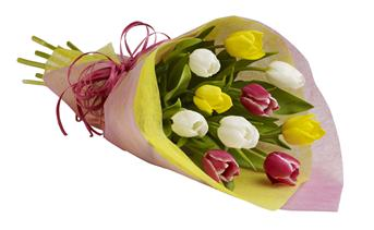 - Give the gift of spring! Delight their day with a colourful bunch of tulips available in many colours of the season.