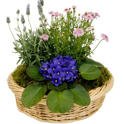 Flowering Dish Garden - Sulphur Springs