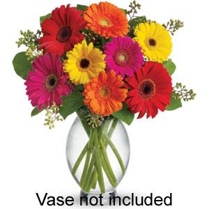 Gerbera Delight No Vase - Howth