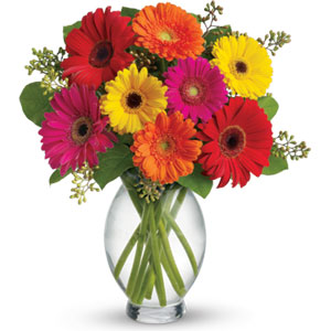 Gerbera Delight - Mason City