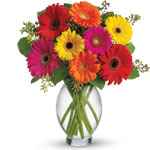Gerbera Delight with Vase - Gowrie Park