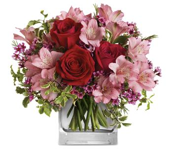 - Make her blush with the beautifully blushing blooms of this romantic arrangement. Arranged inside a glass cube that catches th
