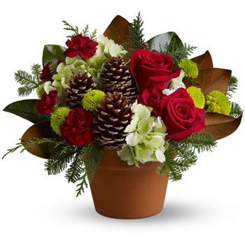 Give all the charm of a country side Christmas this year with a rustic mix of lush red roses amidst chartreuse and burgundy bloo