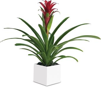 this gorgeous beauty adds red and tropical greenery to any room.