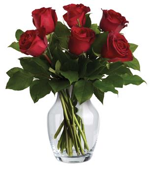 The red rose's exquisite beauty is reason enough to make it the ideal choice