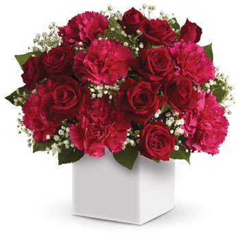Joyful red flowers presented in a white box make the perfect gift for Christmas. AU/NZ/US/CA