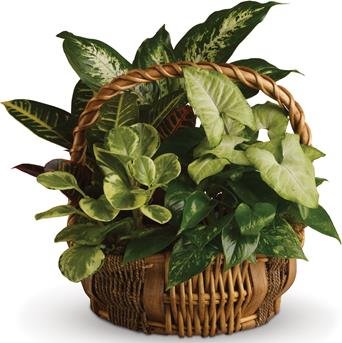 All kinds of gorgeous greens fill this basket that makes a perfect gift for men or women.